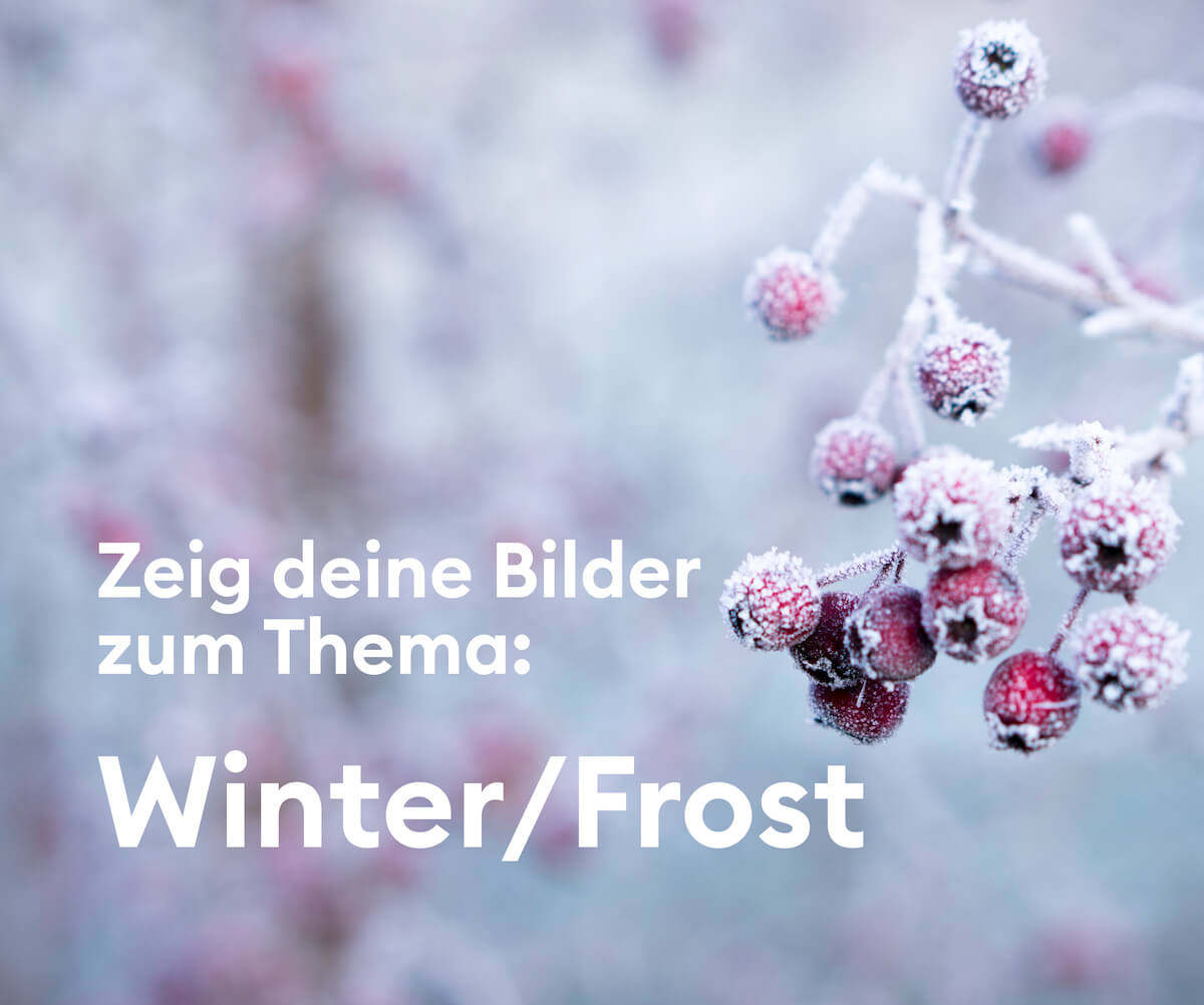 motto_20191120_winter_frost