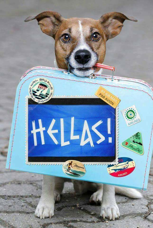 hellas_hund